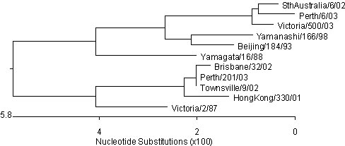 Figure 5. Evolutionary relationships between influenza A(H3) haemagglutinins (HA1 region)